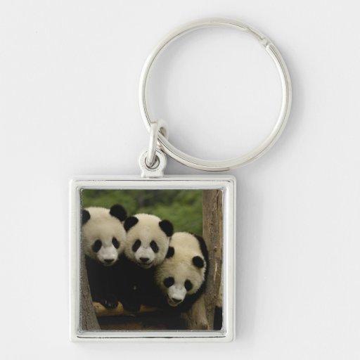 Giant panda babies Ailuropoda melanoleuca) 3 Key Chains