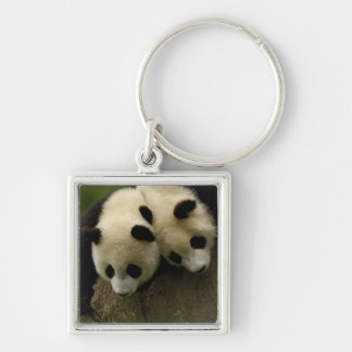 Giant panda babies (Ailuropoda melanoleuca) 3 Silver-Colored Square Keychain