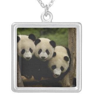 Giant panda babies Ailuropoda melanoleuca) 3 Silver Plated Necklace