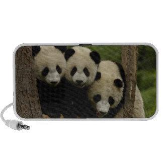 Giant panda babies Ailuropoda melanoleuca) 3 Speaker