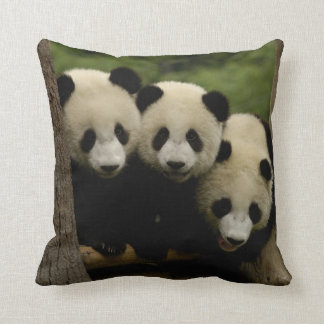 Giant panda babies Ailuropoda melanoleuca) 3 Throw Pillow