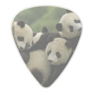 Giant panda babies Ailuropoda melanoleuca) 4 Acetal Guitar Pick