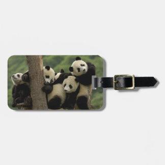 Giant panda babies Ailuropoda melanoleuca) 4 Bag Tag