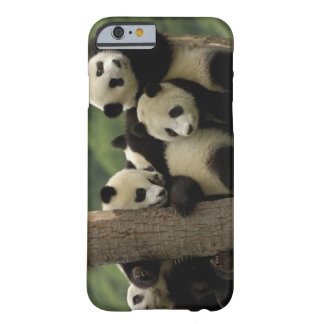 Giant panda babies Ailuropoda melanoleuca) 4 Barely There iPhone 6 Case