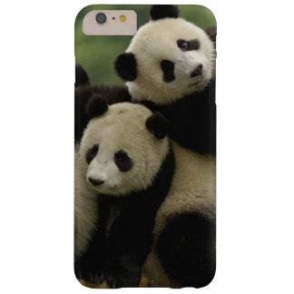 Giant panda babies Ailuropoda melanoleuca) 4 Barely There iPhone 6 Plus Case