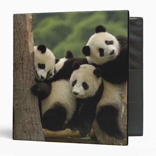 Giant panda babies Ailuropoda melanoleuca) 4 3 Ring Binders