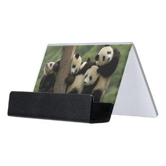Giant panda babies Ailuropoda melanoleuca) 4 Desk Business Card Holder
