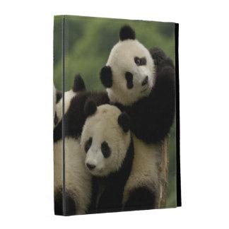 Giant panda babies Ailuropoda melanoleuca) 4 iPad Folio Cases