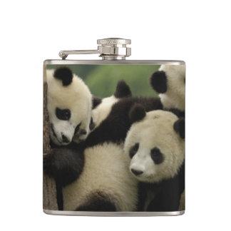 Giant panda babies Ailuropoda melanoleuca) 4 Flask