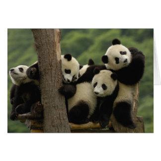Giant panda babies Ailuropoda melanoleuca) 4 Greeting Card