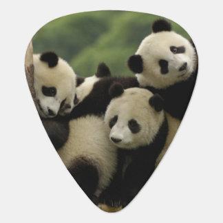 Giant panda babies Ailuropoda melanoleuca) 4 Guitar Pick