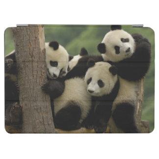 Giant panda babies Ailuropoda melanoleuca 4 iPad Air Cover