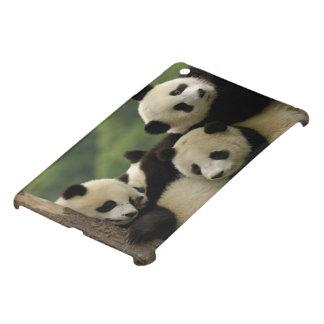 Giant panda babies Ailuropoda melanoleuca) 4 iPad Mini Covers