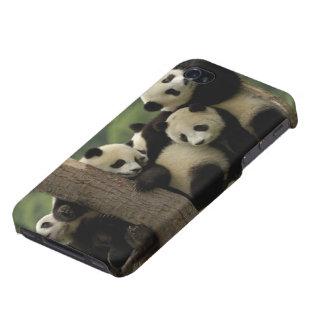 Giant panda babies Ailuropoda melanoleuca) 4 iPhone 4/4S Covers