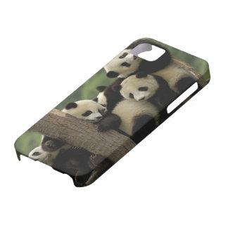 Giant panda babies Ailuropoda melanoleuca) 4 iPhone SE/5/5s Case