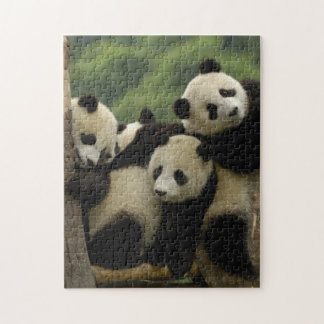 Giant panda babies Ailuropoda melanoleuca) 4 Jigsaw Puzzle