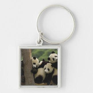 Giant panda babies Ailuropoda melanoleuca) 4 Silver-Colored Square Keychain