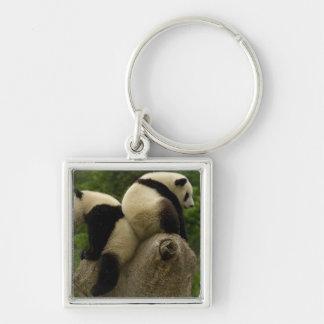 Giant panda babies (Ailuropoda melanoleuca) 4 Silver-Colored Square Keychain