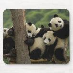 Giant panda babies Ailuropoda melanoleuca) 4 Mouse Pad