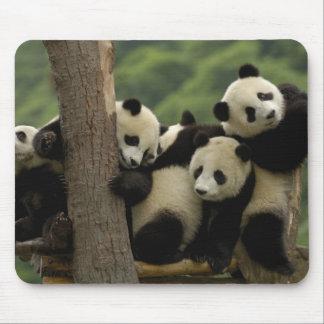 Giant panda babies Ailuropoda melanoleuca 4 Mouse Pad