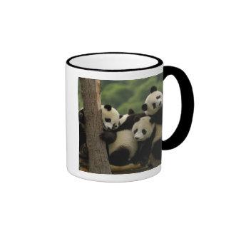 Giant panda babies Ailuropoda melanoleuca) 4 Mugs