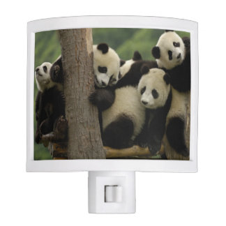 Giant panda babies Ailuropoda melanoleuca) 4 Night Light
