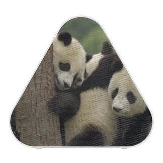 Giant panda babies Ailuropoda melanoleuca) 4 Bluetooth Speaker