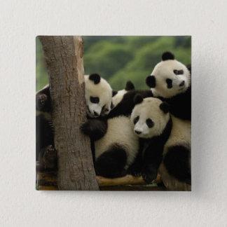 Giant panda babies Ailuropoda melanoleuca) 4 Pinback Button