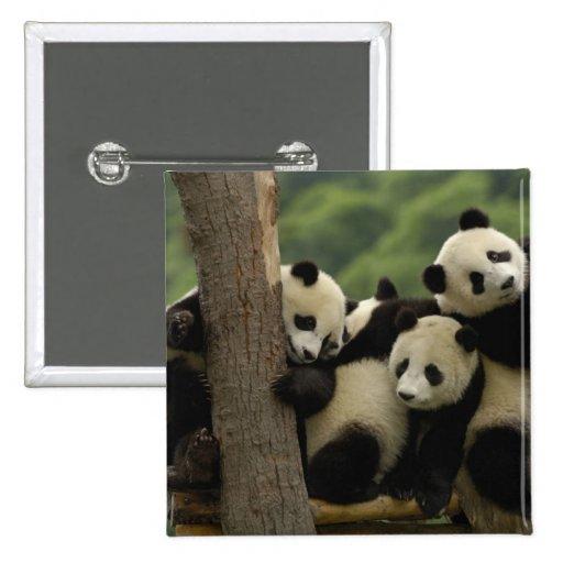 Giant panda babies Ailuropoda melanoleuca) 4 Pins