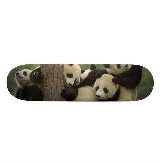 Giant panda babies Ailuropoda melanoleuca) 4 Skateboard Deck