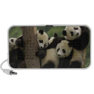 Giant panda babies Ailuropoda melanoleuca) 4 Speaker