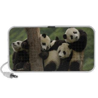 Giant panda babies Ailuropoda melanoleuca) 4 Mini Speakers