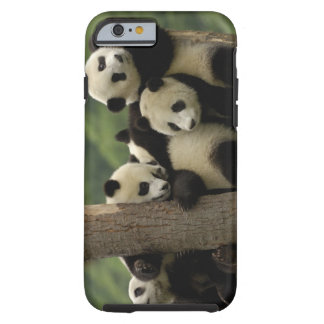 Giant panda babies Ailuropoda melanoleuca) 4 Tough iPhone 6 Case
