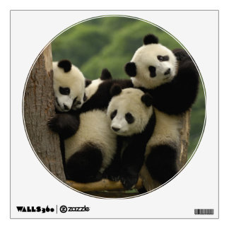 Giant panda babies Ailuropoda melanoleuca) 4 Room Graphics