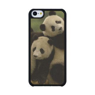 Giant panda babies Ailuropoda melanoleuca) 4 Carved® Maple iPhone 5C Case