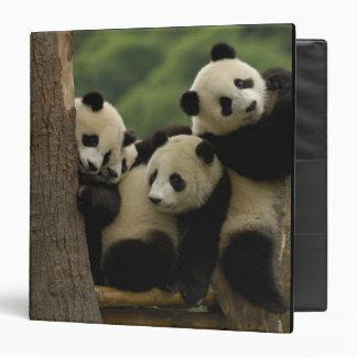 Giant panda babies Ailuropoda melanoleuca) 5 Binders