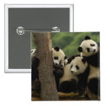 Giant panda babies Ailuropoda melanoleuca) 5 Button