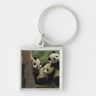 Giant panda babies Ailuropoda melanoleuca) 5 Silver-Colored Square Keychain