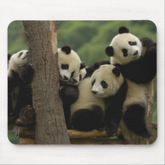 Giant panda babies Ailuropoda melanoleuca 5 Mouse Pads
