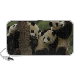Giant panda babies Ailuropoda melanoleuca) 5 PC Speakers