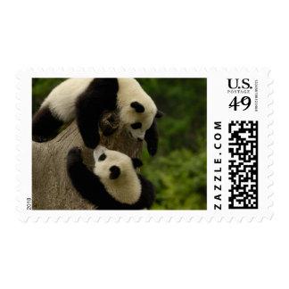 Giant panda babies (Ailuropoda melanoleuca) 5 Postage