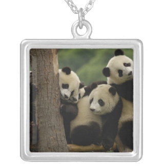 Giant panda babies Ailuropoda melanoleuca) 5 Silver Plated Necklace