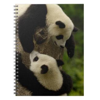 Giant panda babies (Ailuropoda melanoleuca) 5 Spiral Notebook