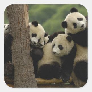 Giant panda babies Ailuropoda melanoleuca) 5 Sticker
