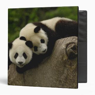 Giant panda babies Ailuropoda melanoleuca) 6 Binder