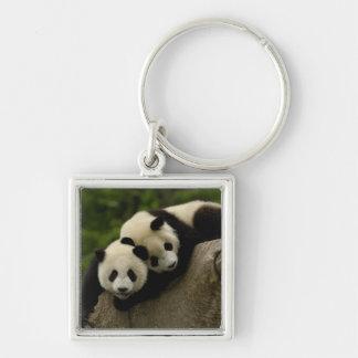 Giant panda babies Ailuropoda melanoleuca) 6 Silver-Colored Square Keychain