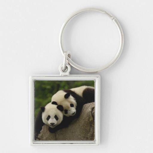 Giant panda babies Ailuropoda melanoleuca) 6 Keychain