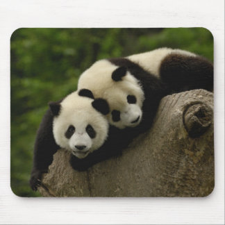 Giant panda babies Ailuropoda melanoleuca) 6 Mouse Pads
