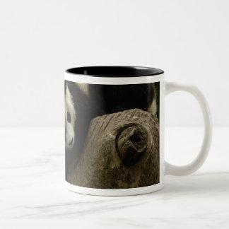 Giant panda babies Ailuropoda melanoleuca) 6 Mug