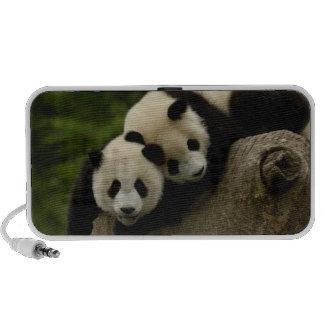 Giant panda babies Ailuropoda melanoleuca) 6 Speaker